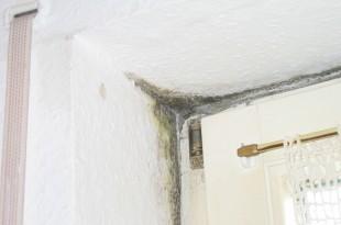Schimmelpilze in der Wohnung sind ein Gesundheitsrisiko