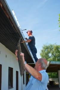 Renovierungsarbeiten: Wespennester entfernen gehört dazu
