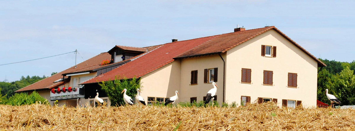 Nah am Menschen: Der Storch brütet fast ausschließlich in menschlichen Siedlungen auf künstlichen Horsten.