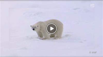 Forst | Die mit dem Eisbär tanzt