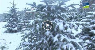 Tiefenbach | Oh, Tannenbaum! – Weihnachtsbaum selbst gefällt