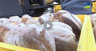 Östringen | Brot-Zeit: Traditionelles Handwerk in Östringen