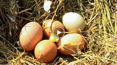 Bruchsal | Die Bedeutung von Ostern