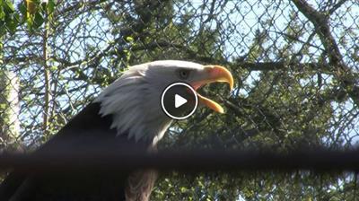 Karlsdorf-Neuthard | Vogelpark Neuthard