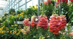 Region | Sommertrends Gartencenter | Status Quo Bahnstadt | Ferienjobvermittlung Hambrücken