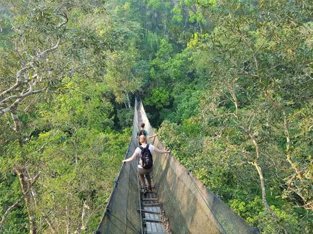 Hängebrücke | Abtieg von der Plattform