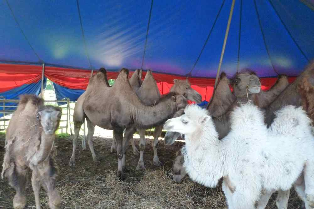 Tiere | Circus Bely