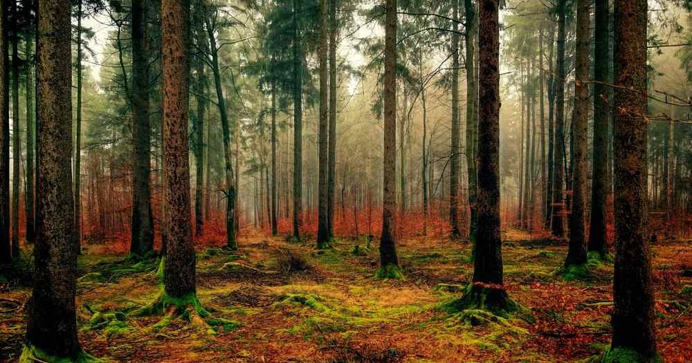 Wald   Pixabay