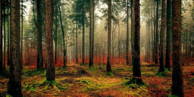 Wald | Pixabay