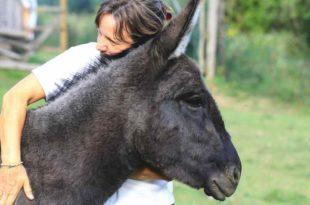 Esel | Birgit Lomnitzer