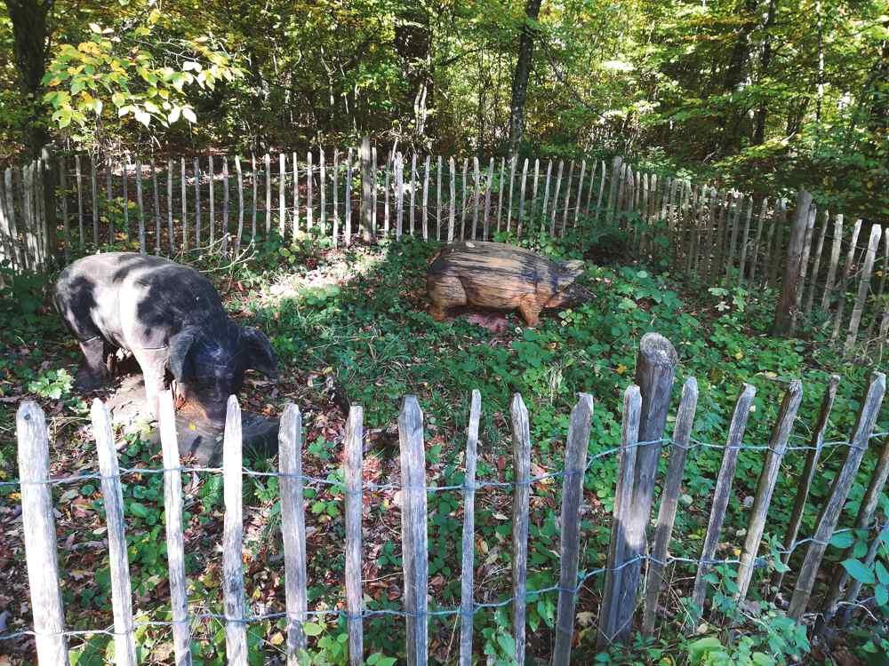 schweine-mit-kind-und-kegel
