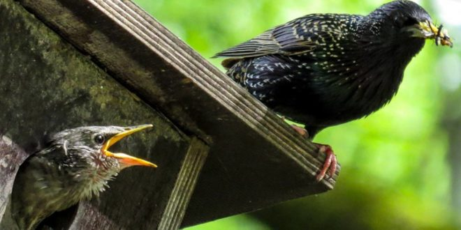 Symbolbild-Vögel-Nistkästen-Familie