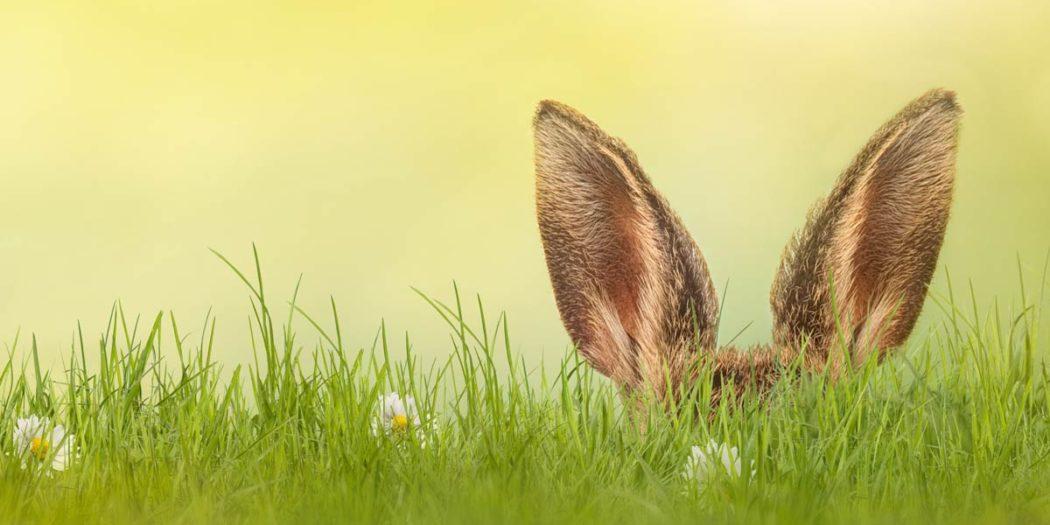 Symbolbild_Frohe-Ostern-von-Landfunker-Hase