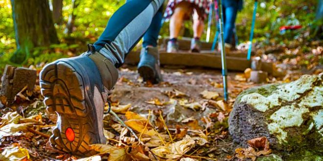 Wandern Wanderer Natur Odenwaldklub