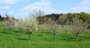 orchard-1356971_1920