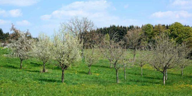 orchard-1356971_1920