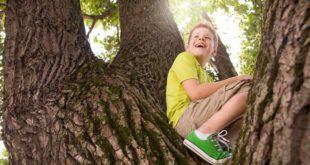 Symbolbild-Kinder-Baum-klettern-spielen-draussen-ss447579994