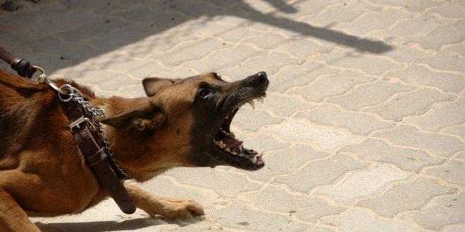 Hundebiss aggresiver Hund Symbolbild Pixabay