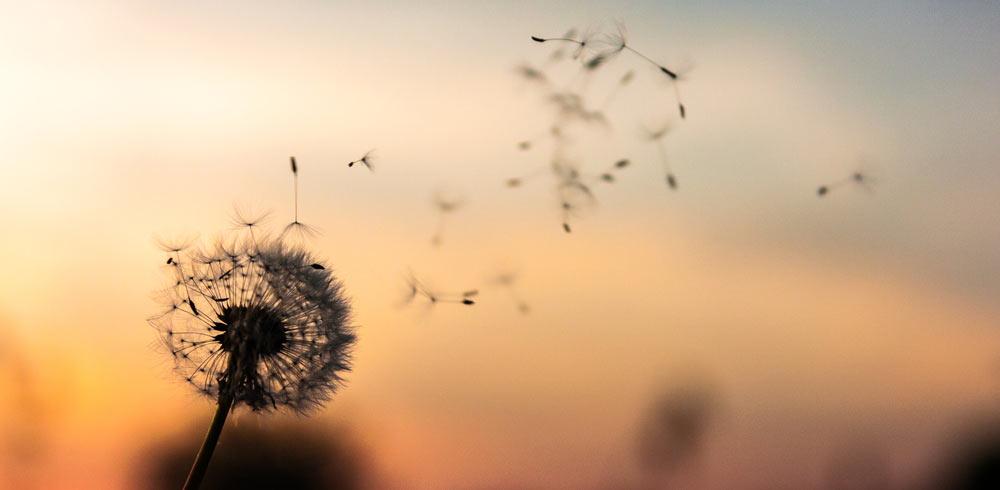 Wind Natur