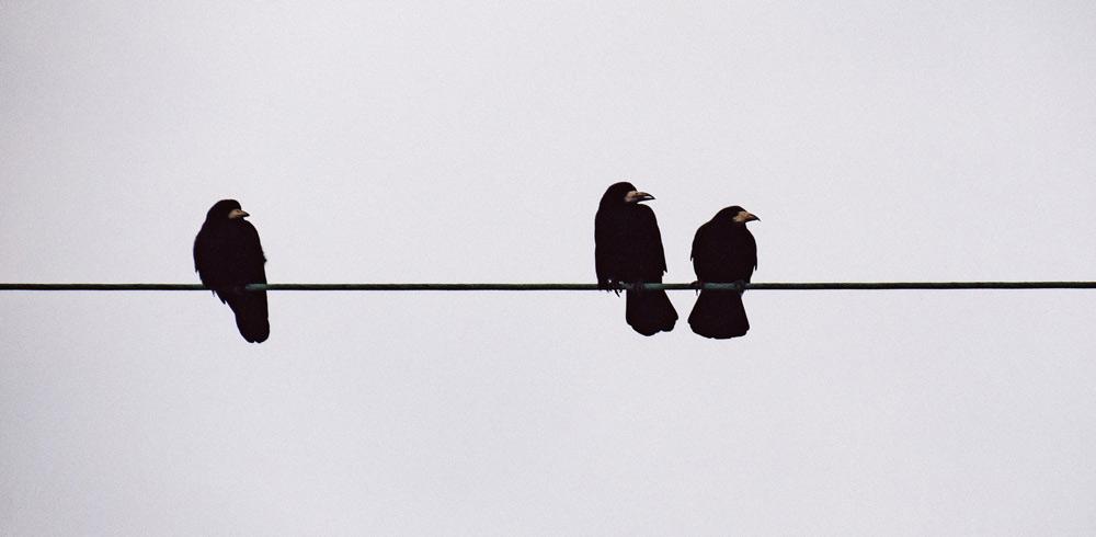 Rabe Vogel Krähe