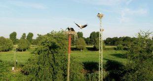 Storchenpark Mingolsheim Störche