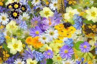 Bluemn Blumenwiese Frühling Bunt Pflanzen Natur