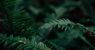 Regenwald Urwald Pflanzen Regen Baum