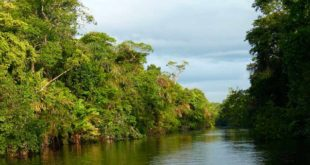 Regenwald Urwald Natur Bäume Südamerika Amazonas