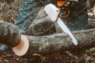 Waldarbeiter mit Baumsäge