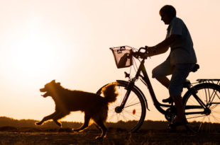 ss_1549473890 Hund Fahrrad