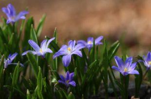 Wanderung Tal der Blausterne Naturpark Stromberg-Heuchelberg