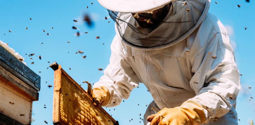 Bienen Bienenstock Imker Imkerei