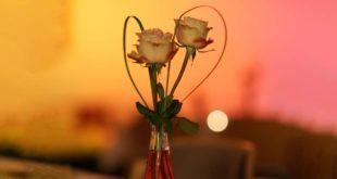 Rosen Liebe Herz Romantik Marriage Week