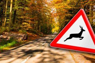 Wild, Wildwechsel, Unfall, Herbst, Straßenschild