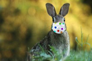 Ostern in Zeiten von Corona Osterhase Maske