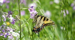 Wiese Blumen Schmetterling