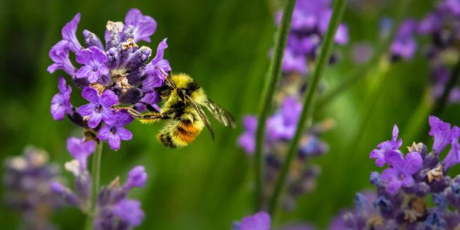 Natur Blumen Wiese Biene Insekten Frühling