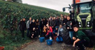Jung-Winzer verkaufen ihre Streberrebe – Schulprojekt der Blanc-und-Fischer-Schule, Sulzfeld