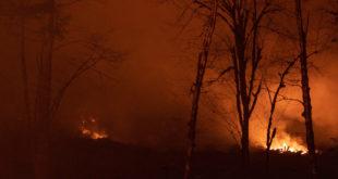 Waldbrand Gefahr Feuer Wald