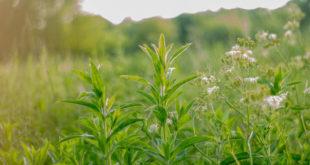 Kräuter Natur grün Sommer Pflanzen