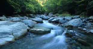 Wasser Fluss Gewässer nass Wald Natur
