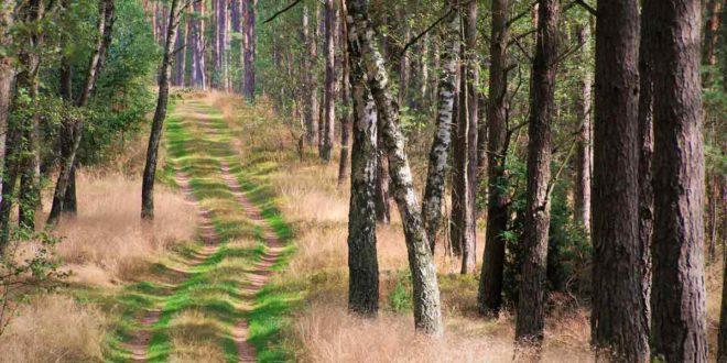 Wald Baum Bäume Natur grün